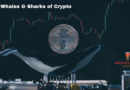 What are crypto whales or sharks?